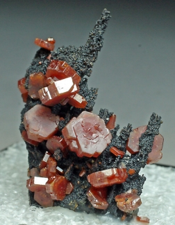 Vanadinite on Goethite from Atlas Mountains, Morocco [db_pics/July_2011/Vanadinite1.jpg]